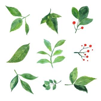 Aquarel planten en bladeren. plantkunde illustratie.