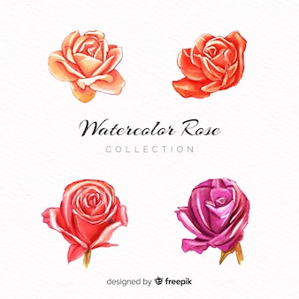 Aquarel roos collectie