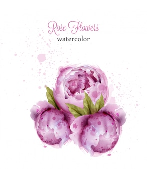 Aquarel roze wilde rozen