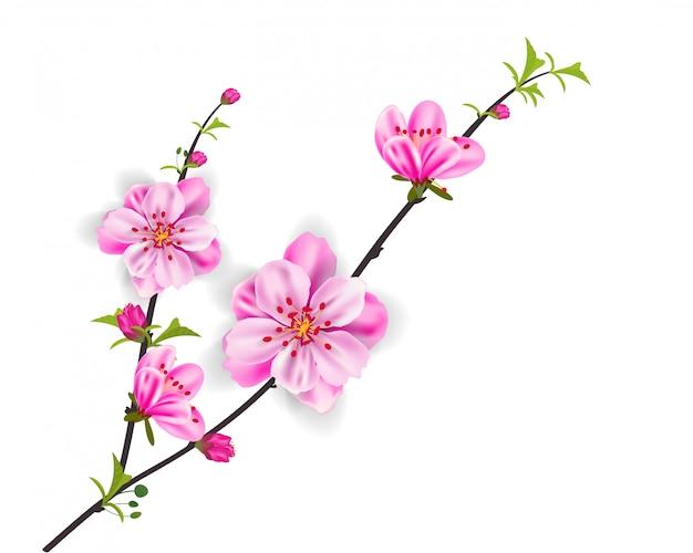 Aquarel sakura-frame. achtergrond met de boomtakken van de bloesemkers.