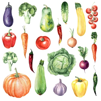 Aquarel set groenten: broccoli, pompoen, aubergine, paprika, wortelen, komkommer.