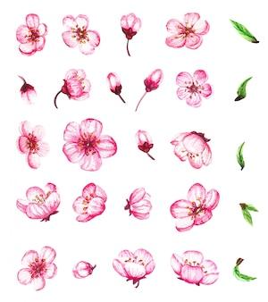 Aquarel set met sakura bloemen en bladeren, kersenbloesem.