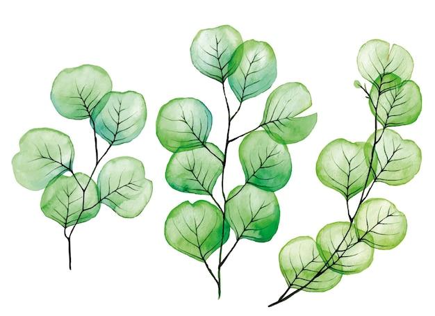 Aquarel set transparante eucalyptus bladeren geïsoleerd op een witte achtergrond