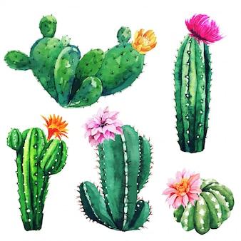 Aquarel set van cactusplanten en vetplanten