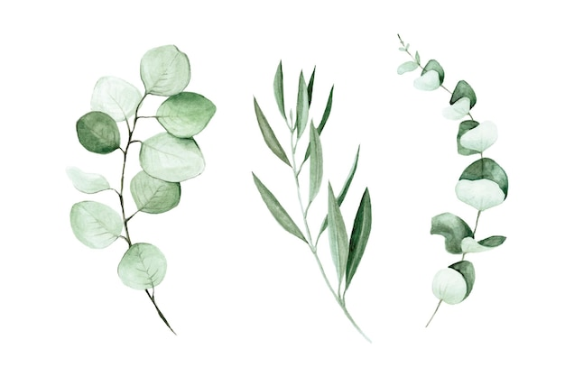 Aquarel set van eucalyptus en olijf bladeren en takken illustraties