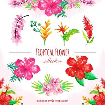 Aquarel set van kleurrijke tropische bloemen