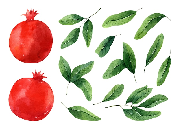 Aquarel set van sappige rode granaatappels en groene bladeren geïsoleerd op een witte achtergrond