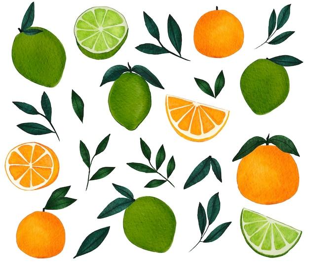 Aquarel sinaasappels limoenen en groene bladeren collectie