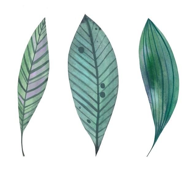 Aquarel tropische bladeren vectorillustratie
