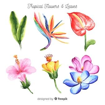 Aquarel tropische bloemen en bladeren pack
