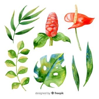 Aquarel tropische bloemen en bladeren