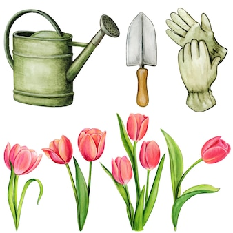 Aquarel tuingereedschap en geïsoleerde tulpen