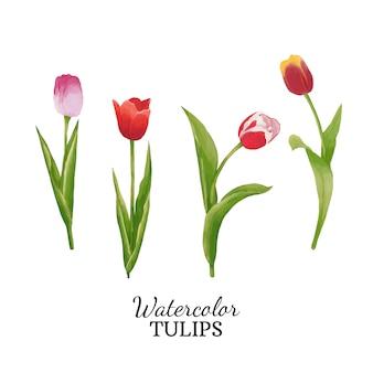 Aquarel tulpen