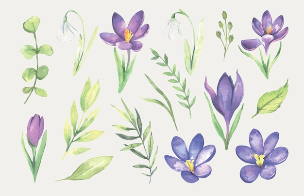 Aquarel violet lentebloem
