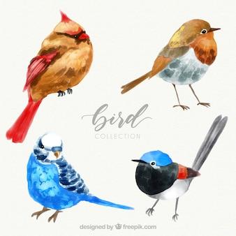Aquarel vogel collectie