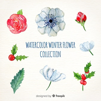 Aquarel winter bloem collectie