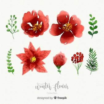 Aquarel winter bloem collectie