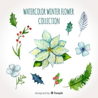 Aquarel winter bloemen collectie
