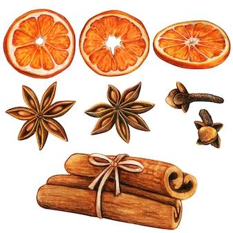 Aquarel winterkruiden en stukjes sinaasappel van hoge kwaliteit