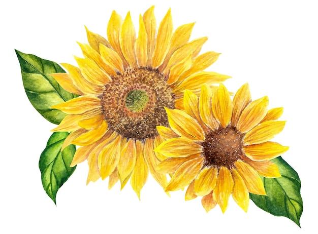 Aquarel zonnebloemen