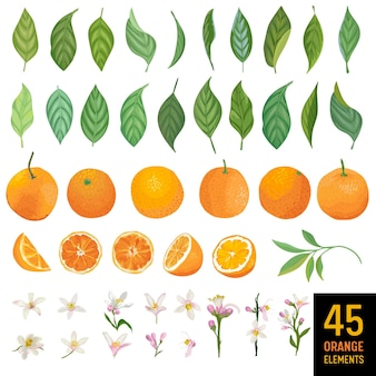 Aquarelelementen van sinaasappelen, bladeren en bloemen voor posters, citruszomerbanners, ontwerpsjablonen, lentebehang. vector illustratie