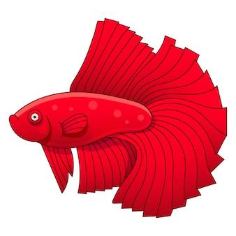 Aquariumvissen cockerel illustratie voor kinderen en volwassenen
