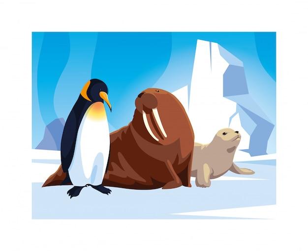 Arctische dieren op de noordpool