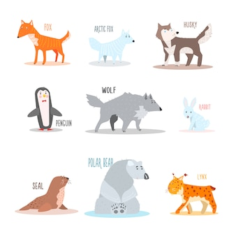 Arctische en antarctische dieren, pinguïn. illustratie