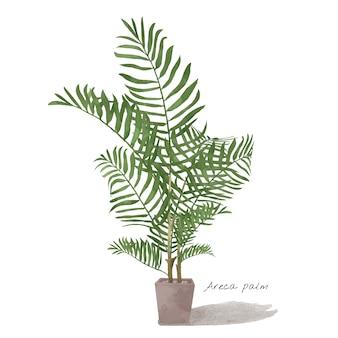 Areca-palmblad op witte achtergrond wordt geïsoleerd die