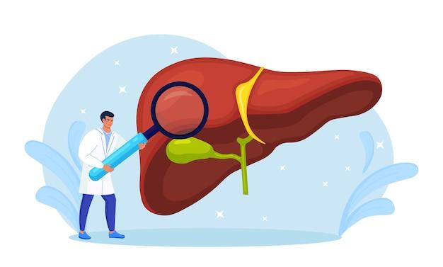 Arts die de lever van de patiënt met vergrootglas onderzoekt. medisch onderzoek. arts diagnose leverziekte, hepatitis a, b, c, d, cirrose, kanker