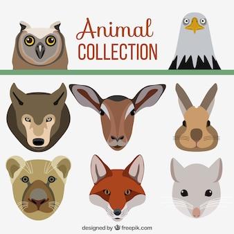 Assortiment van platte decoratieve dieren