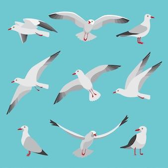 Atlantische zeemeeuwen in cartoon-stijl. foto's van vogels in verschillende poses