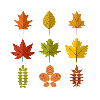 Autumn leaf illustration symbol graphic design template set