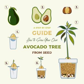 Avocado boom vector groeiende gids. groene eenvoudige instructie om avocado boom uit zaad te laten groeien. levenscyclus van de avocado.
