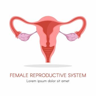 Baarmoeder en eierstokken, organen van het vrouwelijke voortplantingssysteem