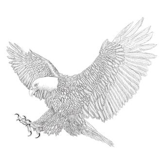 Bald eagle swoop aanval gevleugelde hand loting schets