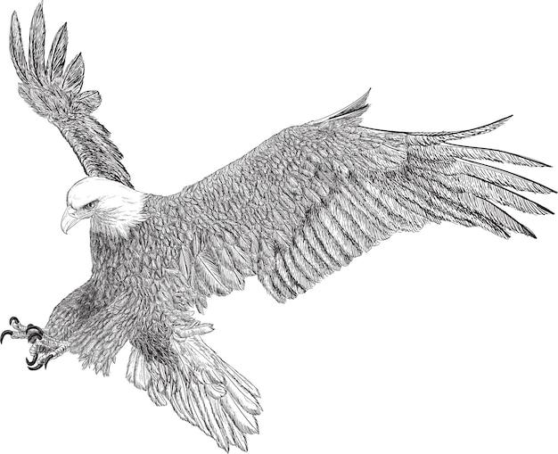 Bald eagle swoop aanval hand loting schets zwarte lijn op witte achtergrond vectorillustratie.