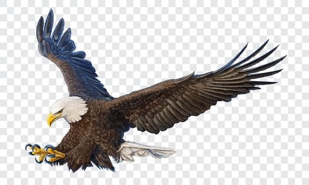 Bald eagle swoop aanval hand tekenen en verf kleur op geruite achtergrond vectorillustratie.