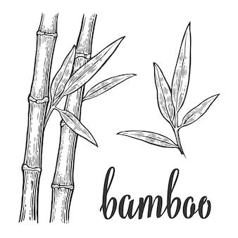 Bamboe bomen witte silhouetten en zwarte omtrek op rode cirkel gravure illustratie