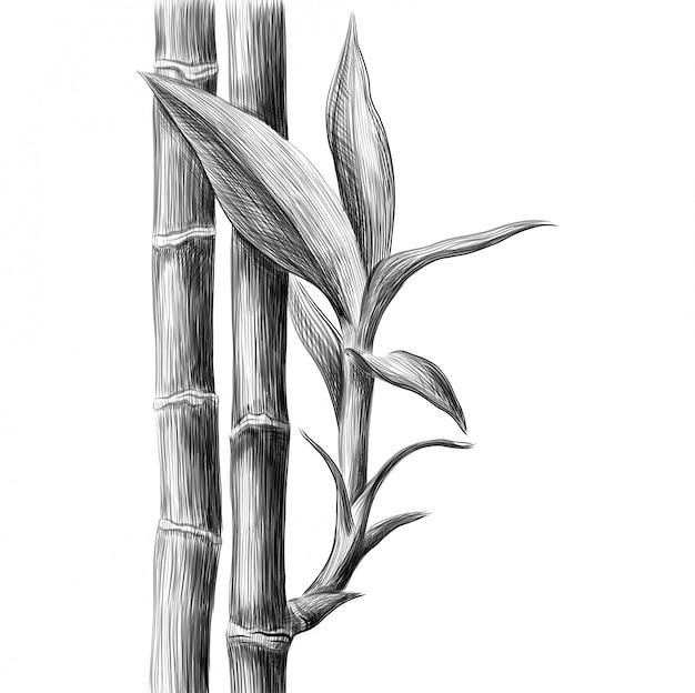 Bamboesteel en bladeren