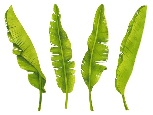 Bananenbladeren set aquarel stijlen element illustraties
