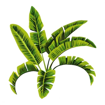 Bananenboom illustratie