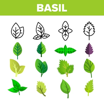 Basilicum blaadjes