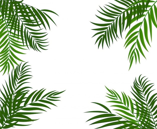 Beautifil palm tree leaf-silhouet