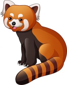 Beeldverhaal rode die panda op witte achtergrond wordt geïsoleerd