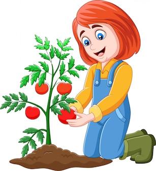 Beeldverhaalmeisje het oogsten tomaten