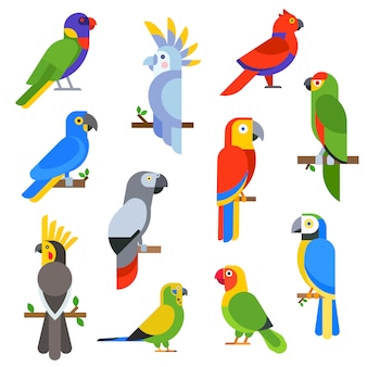 Beeldverhaalpapegaaien geplaatst en papegaaien wilde dierlijke vogels vectorillustratie