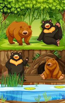 Beren in de natuur scène