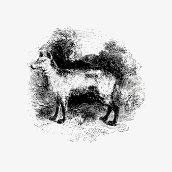 Berg vos vintage tekening