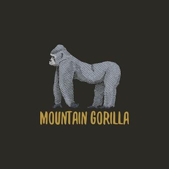 Berggorilla gegraveerd hand getrokken in oude schets stijl, vintage dier aap, aap of primaat logo